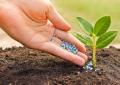تهیه کود خانگی برای گیاهان آپارتمانی؛ راهنمای خرید کود خانگی